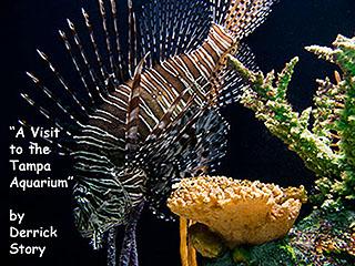 aquarium_poster.jpg