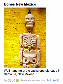 new_mexico_bones.png
