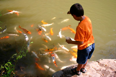 Boy with Koi