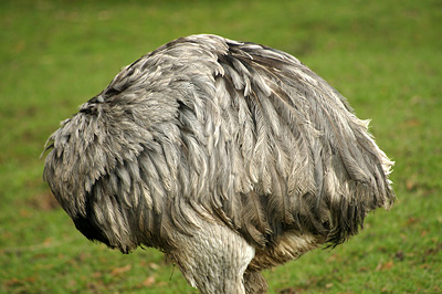 headless-rhea.jpg