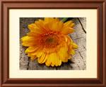 photovu_frame.jpg